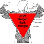 Tai Chi Makes The Back One Big Muscle