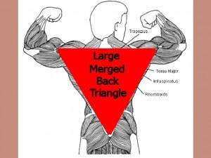 Back_One_Big_Muscle-MergedBackTriangle