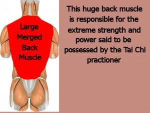 Back_One_Big_Muscle-MergedMuscleProvidesStrength