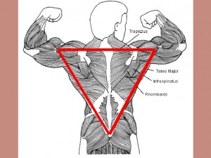 Back_One_Big_Muscle-ShouldersTailboneTriangle