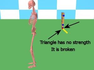 Back_One_Big_Muscle-TailboneLosesStructuralStrength