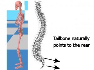 Back_One_Big_Muscle-TailboneNaturallyPointsToRear