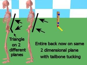 Back_One_Big_Muscle-TailboneTuckedBackOnePlane