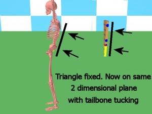 Back_One_Big_Muscle-TriangleBackSamePlane