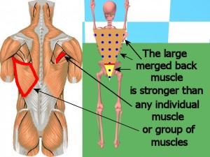 Back_One_Big_Muscle-TriangleStrongerThanIndividualMuscles