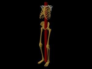 Single_Cylinder_Skeleton_Derivation-SkeletonLongCylinderAngledView