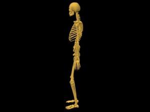 Single_Cylinder_Skeleton_Derivation-SkeletonProfileView