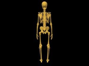 Single_Cylinder_Skeleton_Derivation-SkeletonRearView