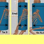 The Stability Of The Yin Fu Ba Gua Stance