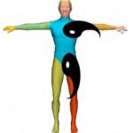 The Yin Yang Body View