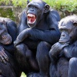 Chimps 'Find Yawning Contagious Even If They Are Just Watching A Cartoon Character Yawn'