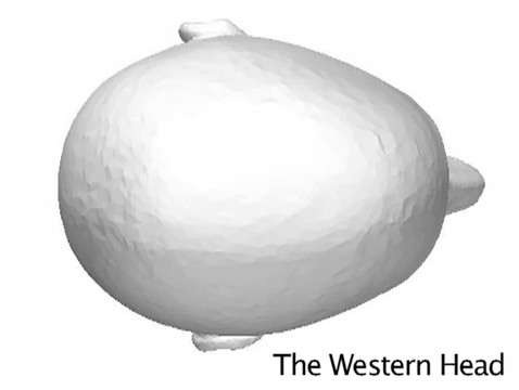Asian_Western_Head_Shapes-WesternHead