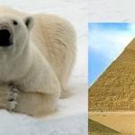 Pyramid Shaped Body Parts