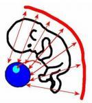 HTALA - Chapter 09 - The Human Egg And The Blob
