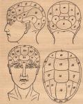 "Health Diagnosis Via Observation Of The Head, Otherwise Known As ""Phrenology"""