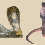 APOTHB 02 - Chapter 19 - The Cobra View Of The Human Body