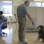 Dog detects thyroid cancer by smelling urine – and is correct nearly nine times out of 10